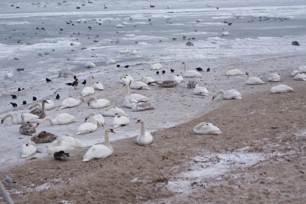 zima nad morzem sopot fashionable