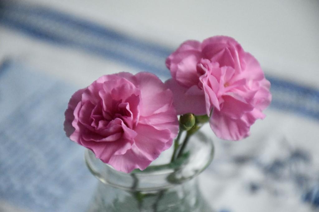 różowe kwiaty w domu